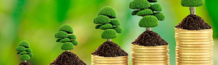 money tree image